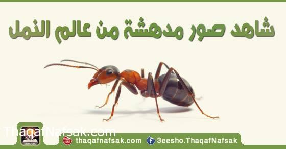 شاهد صور مدهشة من عالم النمل 1098507_745253842175