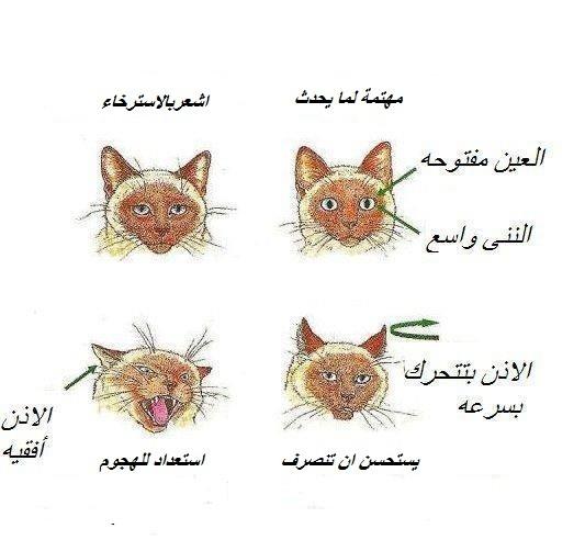 www.thaqafnafsak.com لغة القطط