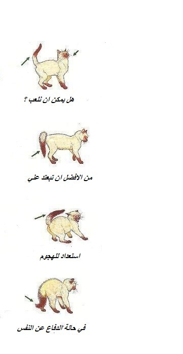 لغة القطط www.thaqafnafsak.com