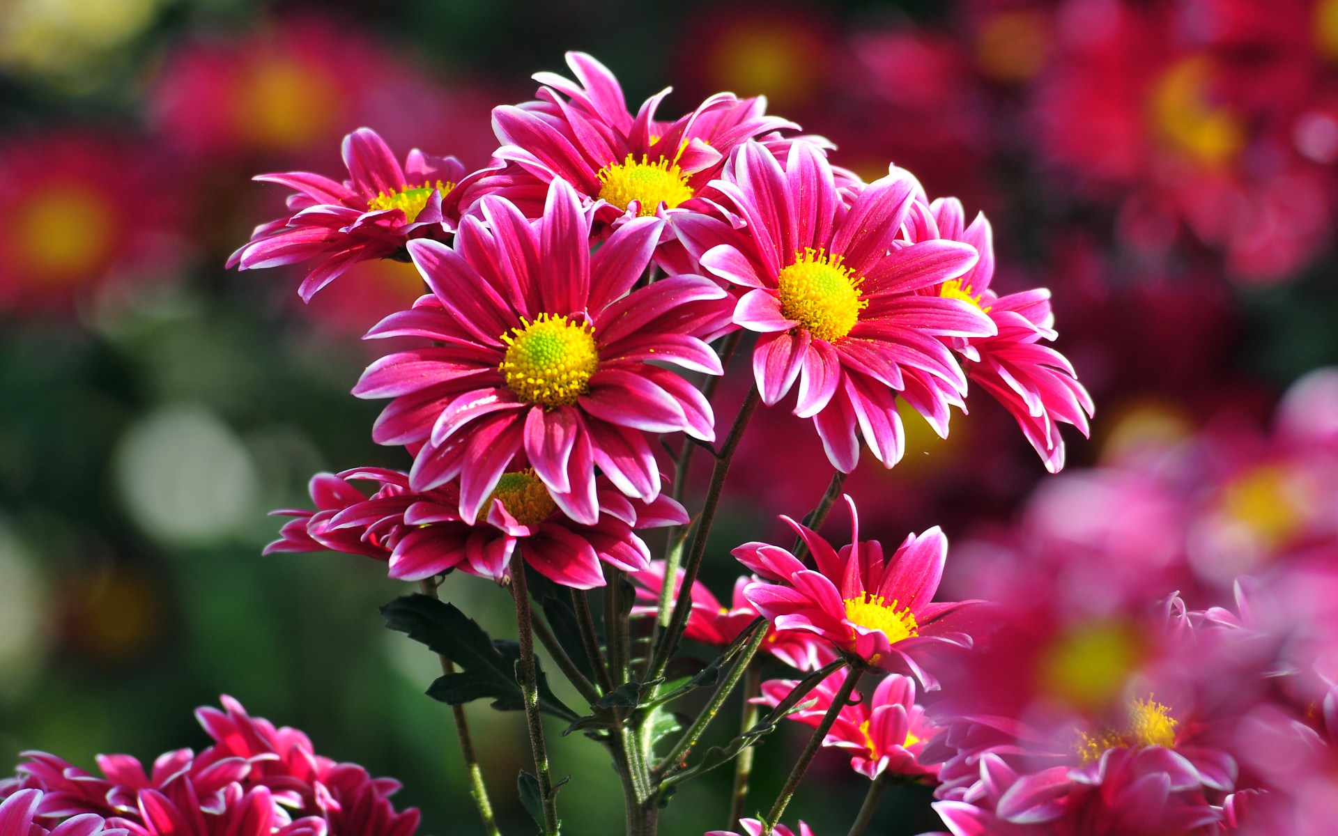 مجموعة رائعة من اجمل الصور للزهور الطبيعيه