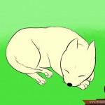 كيفية رسم كلب كرتوني بأوضاع وأشكال مختلفة بالصور 10478918_74669014203