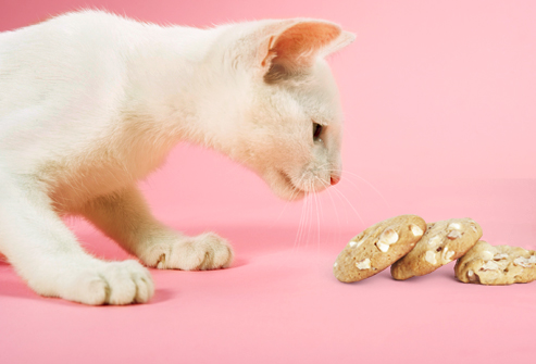 Can Cats Eat Macadamia Nuts