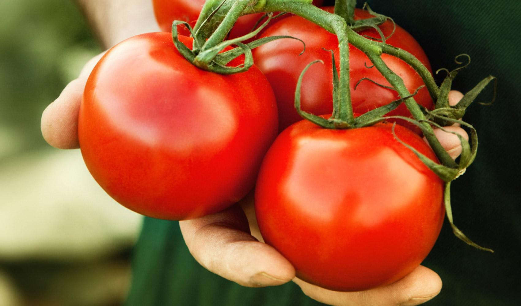 فوائد الطماطم الصحية hero_tomatoes_held.j