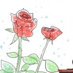 طريقة زراعة الورد المنزل واستمتع 670px-Grow-Roses-Step-13-150x150.jpg
