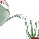 طريقة زراعة الورد المنزل واستمتع 670px-Grow-Roses-Step-8-150x150.jpg