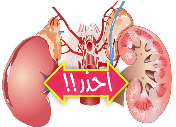 ١٠ عادات تدمر الكلى أحذر منها Kidney-copy.jpg
