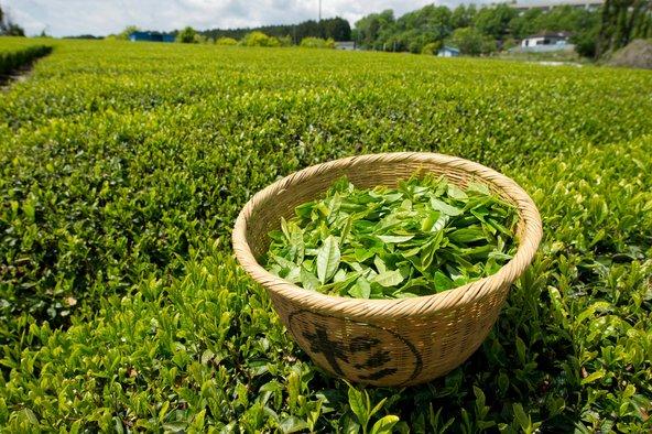 الشاي الأخضر.. فوائد متعددة %D8%B1%D8%AC%D9%8A%D