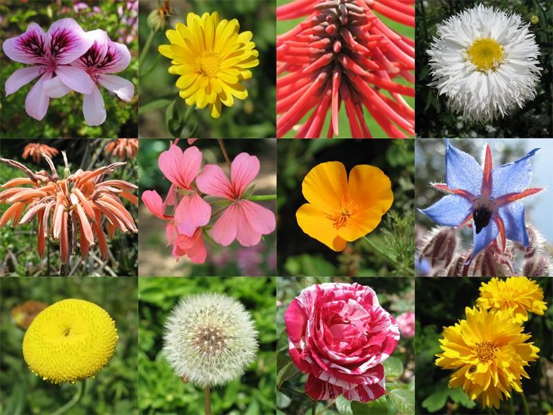 حلل شخصيتك من نوع الزهور التي تحبها