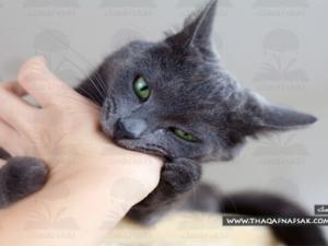 مرض-القطط