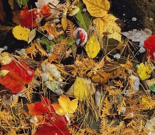الخريف بكل الألوان من جميع أنحاء العالم %D8%A7%D9%84%D8%AE%D