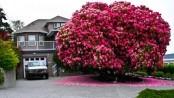تصفح بالصور أجمل الأشجار المذهلة حول العالم 1