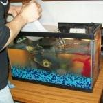 طرق تنظيف حوض السمك بالصور طرق-تنظيف-ح