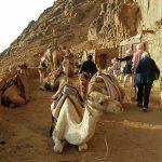 شاهد الوادي المقدس طوي بالصور 4