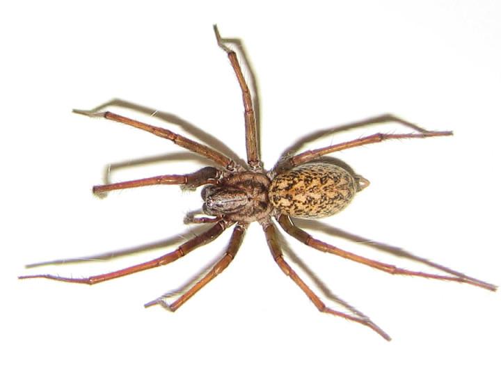 أخطر 10 عناكب في العالم