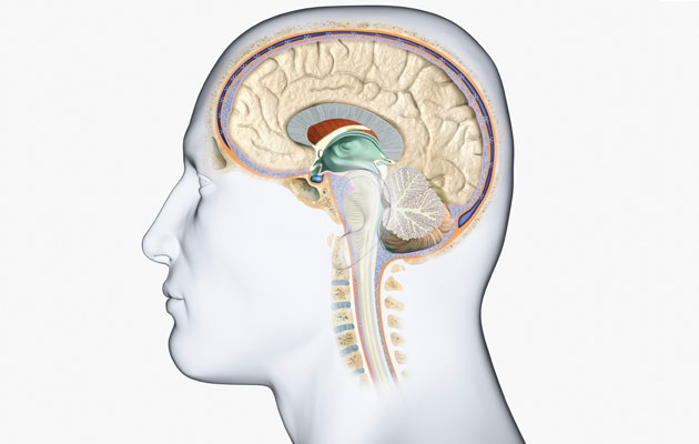 ورم المخ