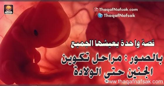 مراحل نمو وتطور الجنين 2