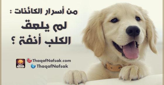 من أسرار الكائنات لماذا يلعق الكلب أنفه ؟ 3921.jpg