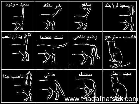 لغة القطط www.thaqafnafsal.com