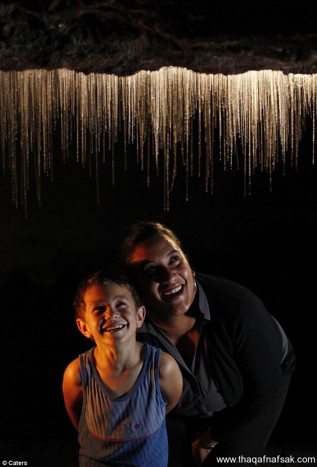 Limestone Caves in New Zealand3 كهف سراج الليل في نيوزيلندا Waitomo Glowworm