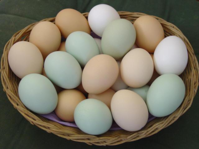 البيض مصدر البروتين
