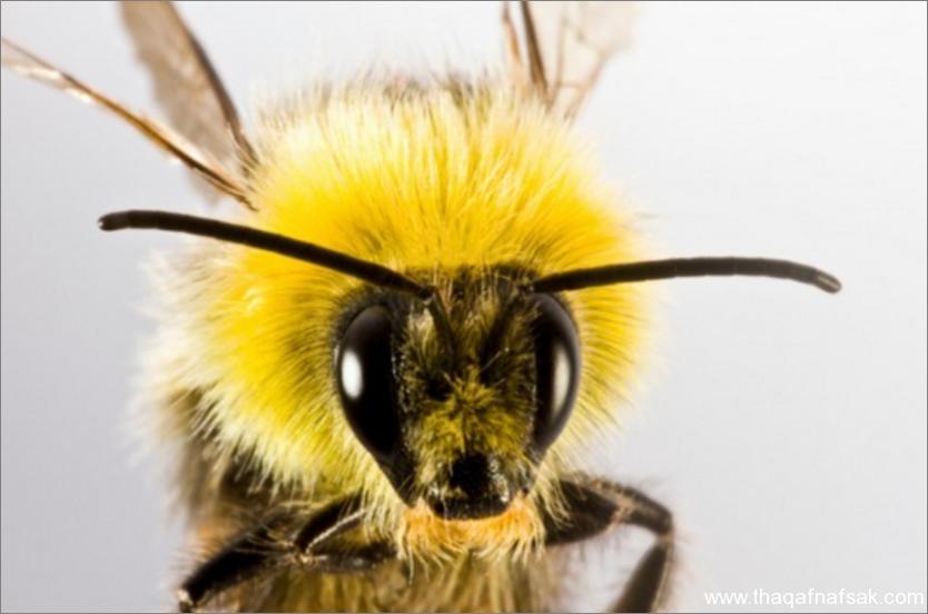 النحل- ثقف نفسك 3