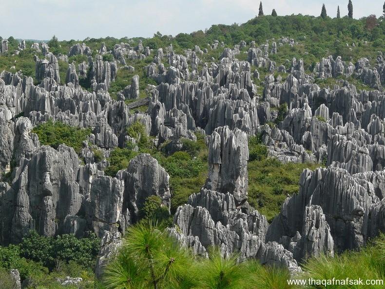 غابة شيلين في الصين ، ثقف نفسك 1