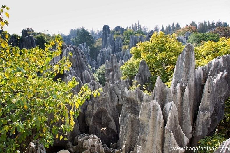 غابة شيلين في الصين ، ثقف نفسك 2