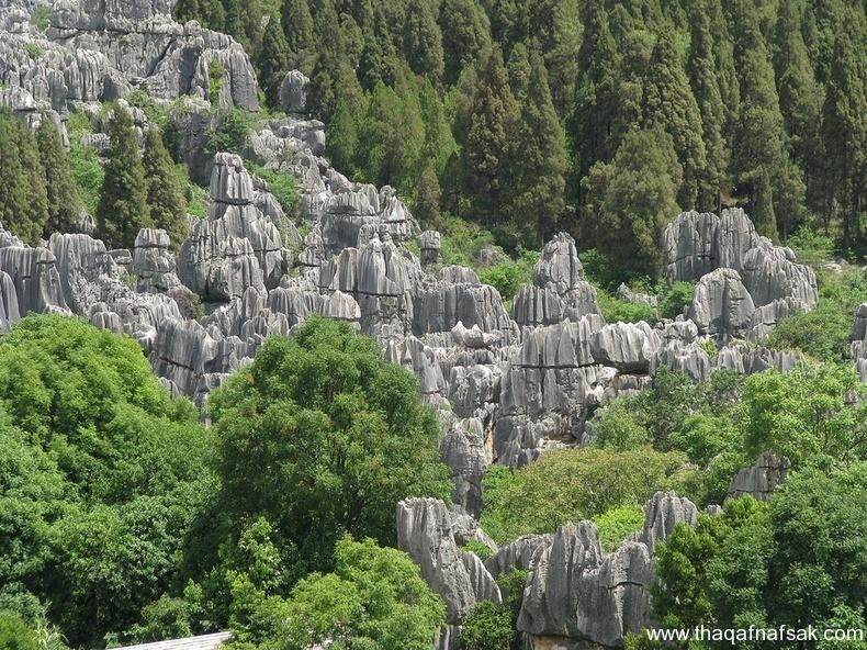 غابة شيلين في الصين ، ثقف نفسك 4