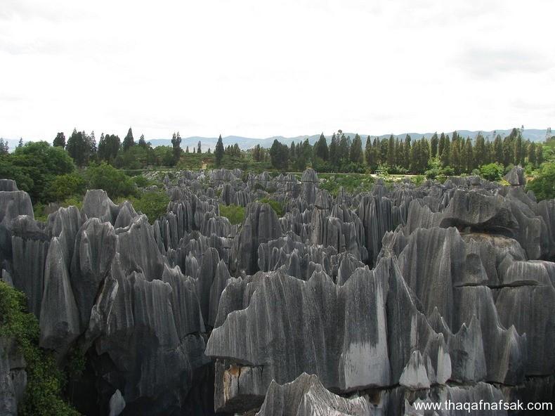 غابة شيلين في الصين ، ثقف نفسك 7