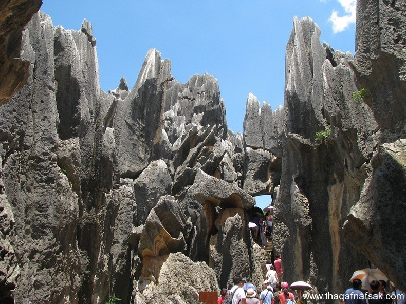 غابة شيلين في الصين ، ثقف نفسك 8
