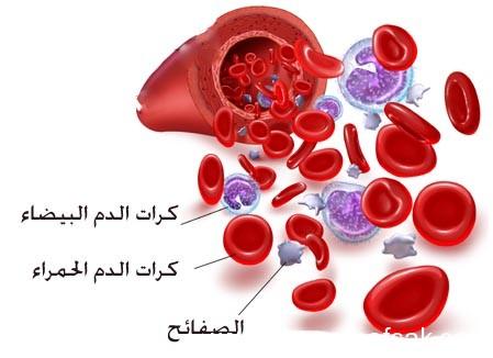 فصائل الدم ، ثقف نفسك 3