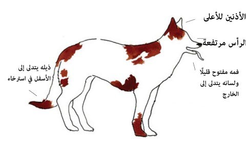 لغة الكلاب ، ثقف نفسك. 1