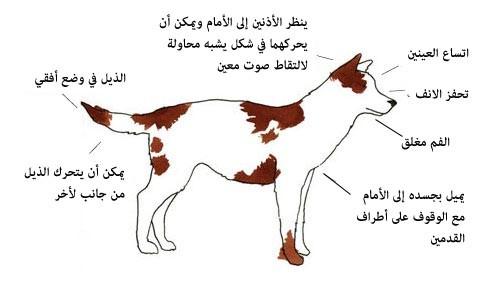 لغة الكلاب ، ثقف نفسك. 2