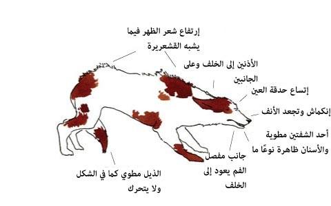 لغة الكلاب ، ثقف نفسك. 4