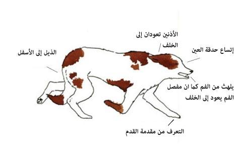 لغة الكلاب ، ثقف نفسك. 5