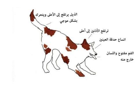 لغة الكلاب ، ثقف نفسك. 8