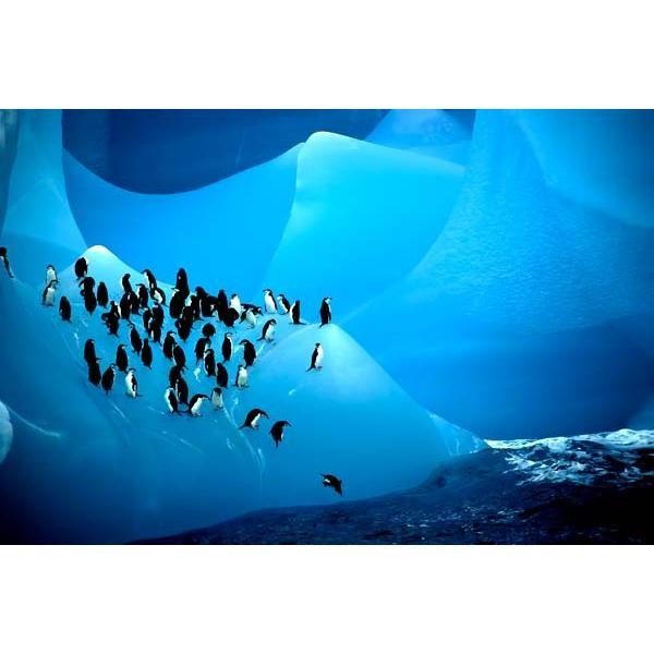 هجرة الحيوانات المذهلة، ثقف نفسك 10