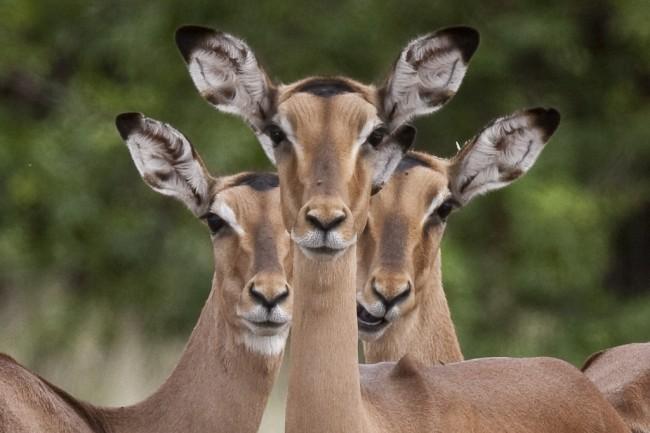 اسرع ١٠ حيوانات في العالم