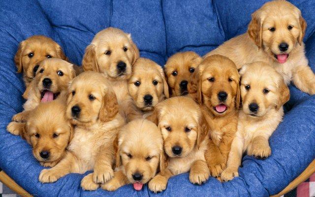 نصائح لتربية الكلاب