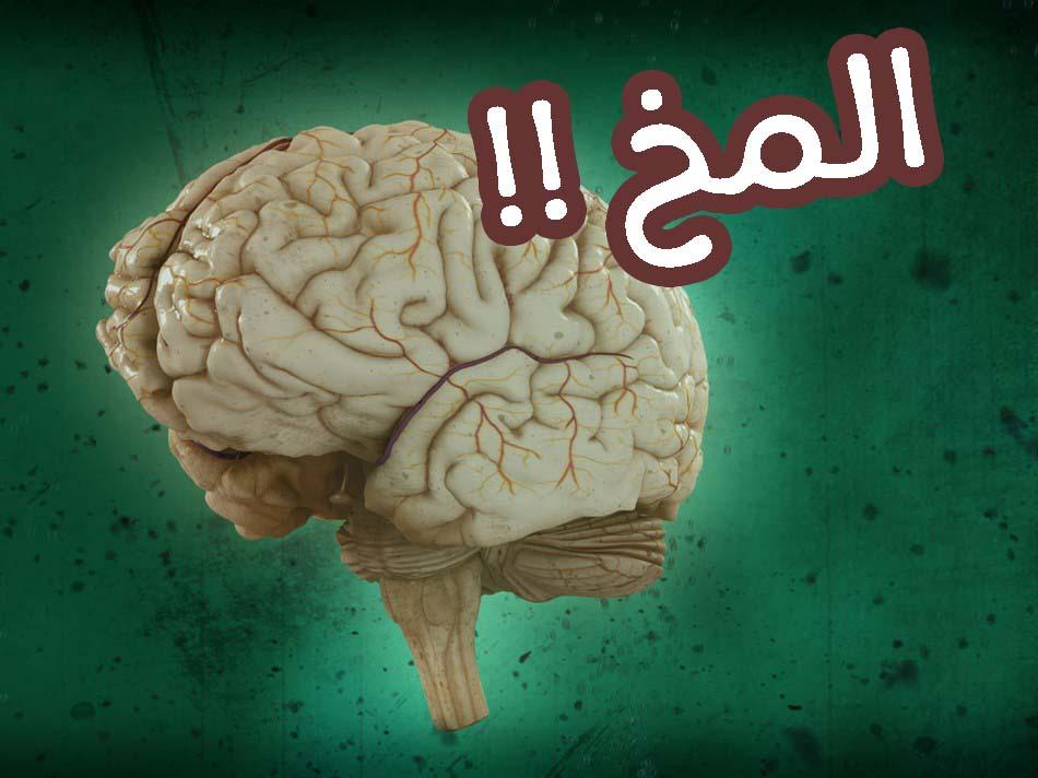 حقائق عن المخ