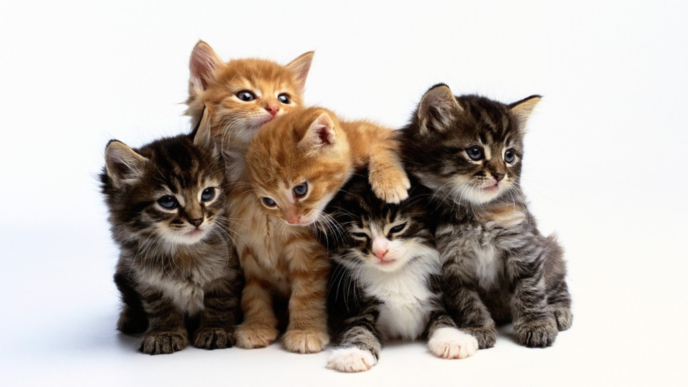 حقائق غريبة عن القطط