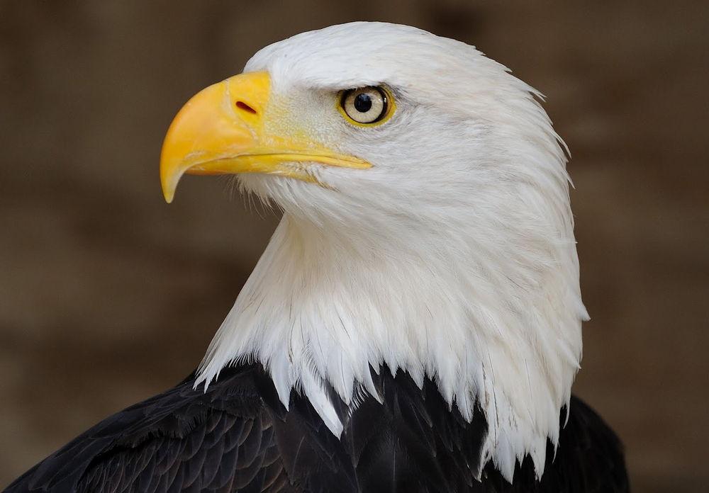 الطيور والشخصية ، ثقف نفسك 2
