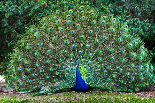 الطيور والشخصية ، ثقف نفسك 5