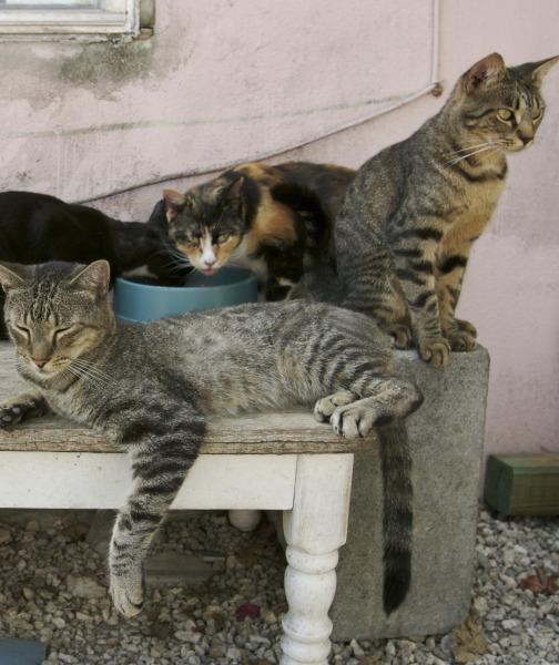 حقائق عن القطط- ثقف نفسك 5