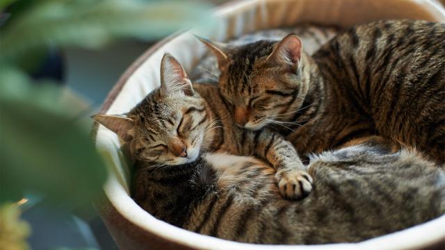 ماهي انواع القطط بالصور ثقف نفسك