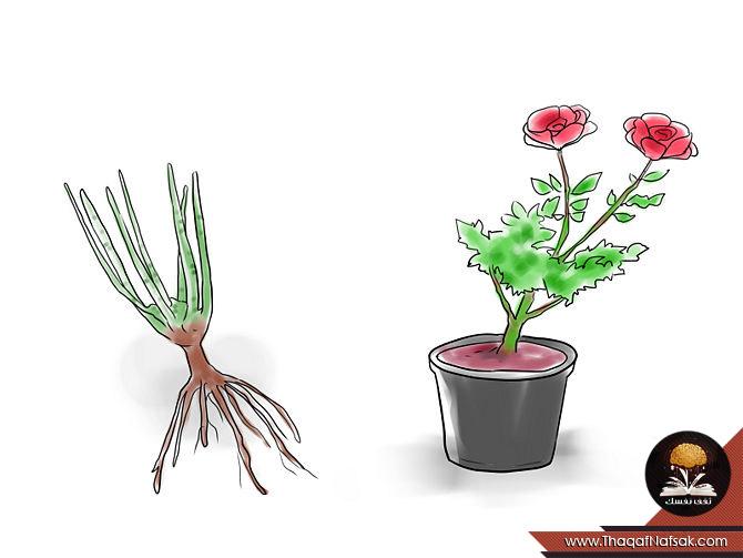طريقة زراعة الورد في المنزل