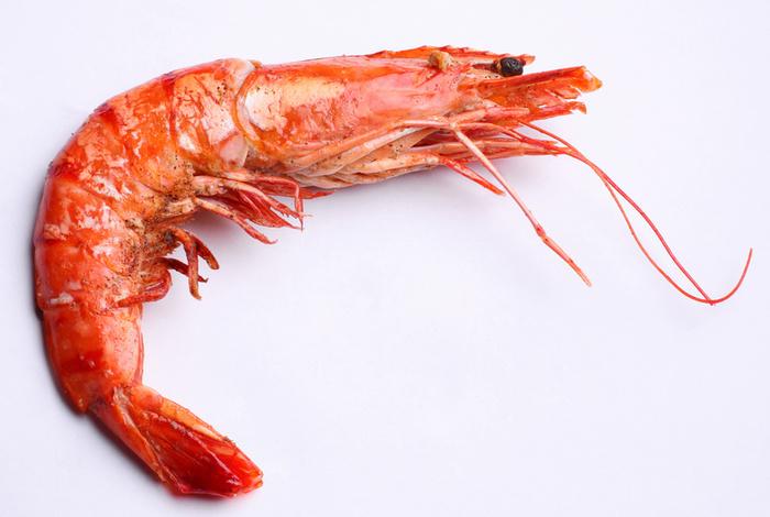 فوائد الجمبري Shrimp2
