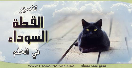 980 تفسير القطة السوداء في الحلم