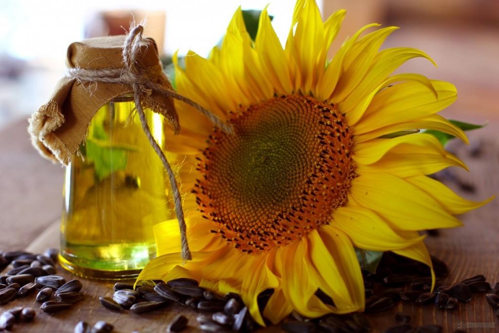 Crude sunflower oil unrefined