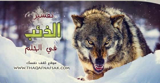 تفسير الذئب في الحلم ثقف نفسك
